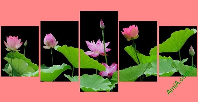tranh-treo-tuong-kho-lon-hoa-sen-5-tam-ghep-bo-amia2501