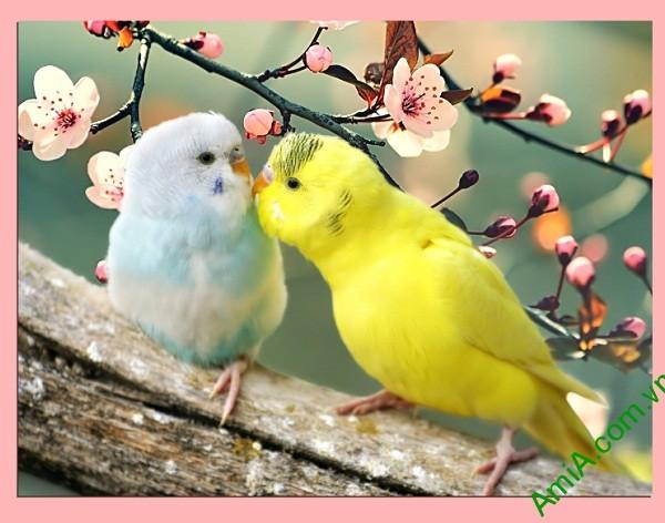 Tranh treo tường phòng ngủ vợ chồng đôi chim vẹt Amia 351