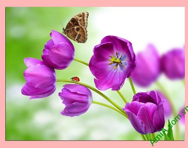 Tranh treo tường hiện đại hoa bướm một tấm amia 345