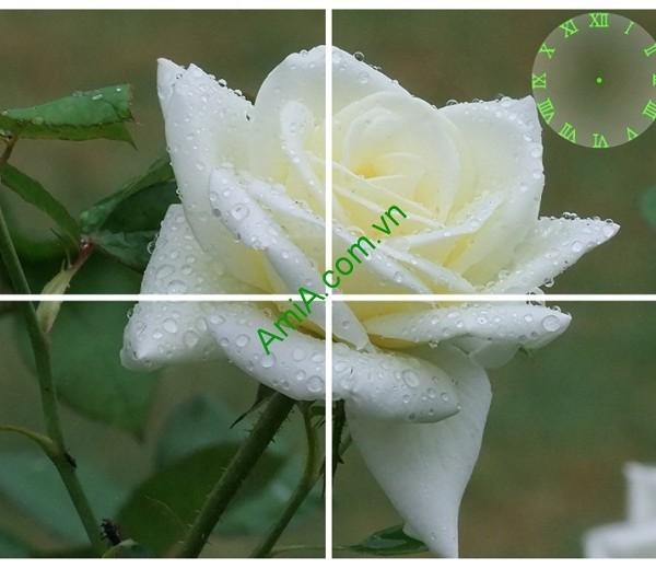 Tranh treo tường hoa hồng trắng trang trí phòng khách