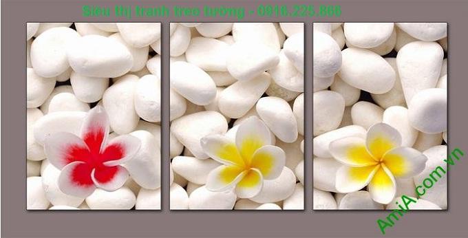 Hinh anh tranh treo tuong spa hoa su da tuyet dep amia 511