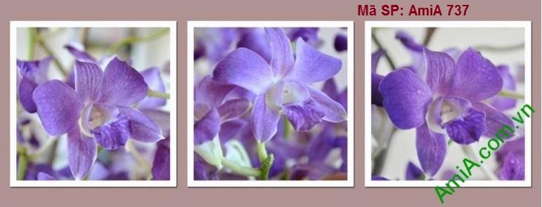 Bo tranh spa treo tuong hoa phong lan màu xanh dep nhat