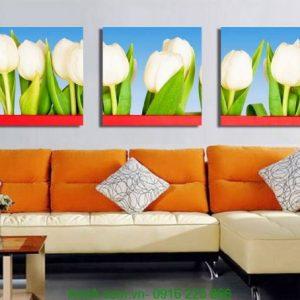 Tranh ghép bộ ba tấm hoa tulip trắng xinh Amia 1224