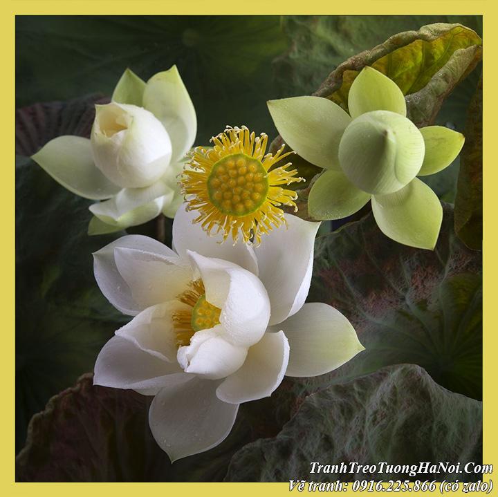 Tranh sơn dầu nghệ thuật vẽ hoa Sen trắng tại AmiA