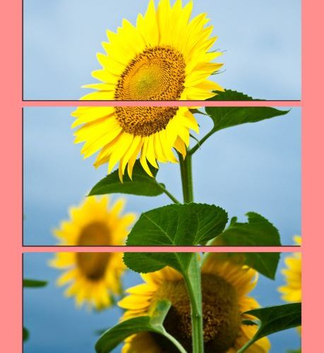 Tranh hoa huong duong ghep bo 3 tam kho doc AmiA 323