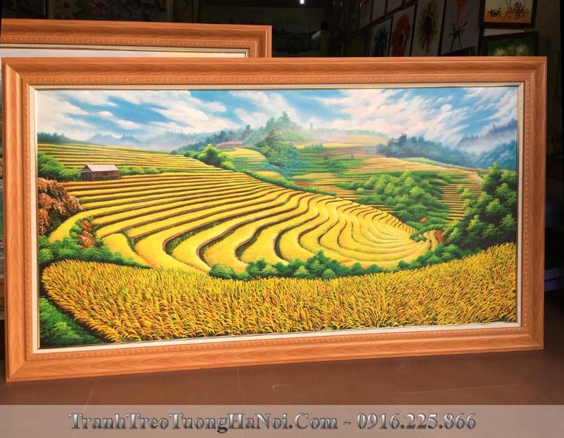 Phong canh dep canh dong lua chin ruong bac thang tsd 428