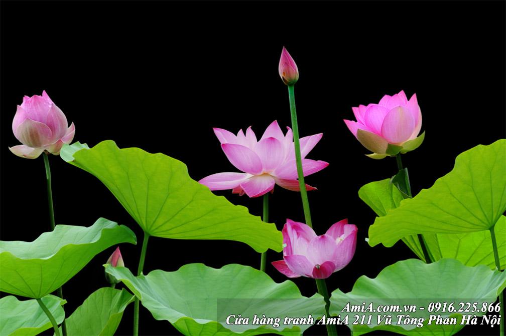 Hoi dap ve hoa sen va tranh hoa sen treo tuong
