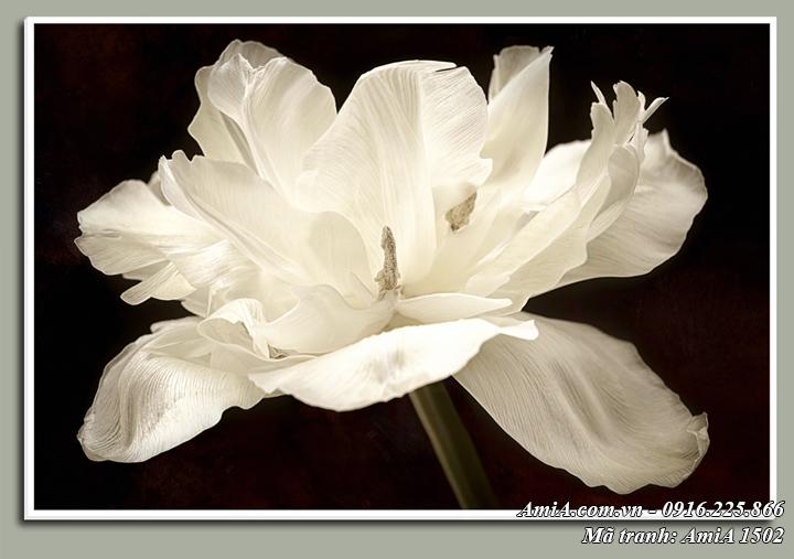 Tranh hoa trắng tinh khôi treo tường phòng khách Amia 1502