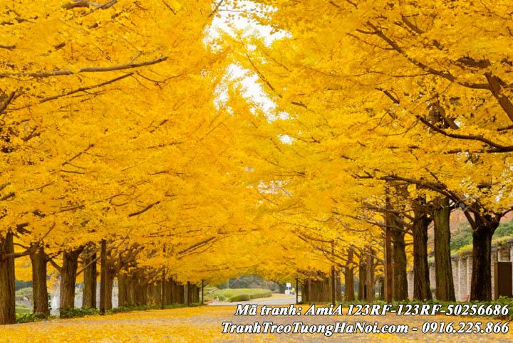 Mẫu tranh treo tường làm theo yêu cầu phong cảnh mùa thu