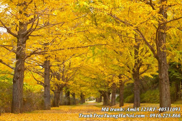 Tranh treo tường làm theo yêu cầu rừng cây mùa thu