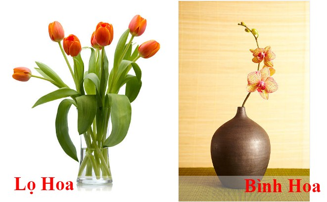 Phan biet lo hoa va binh hoa khac nhau diem gi
