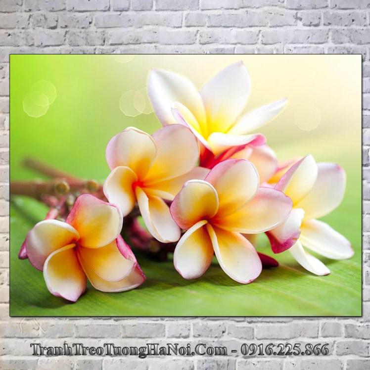Tranh treo tuong spa hoa su amia 346