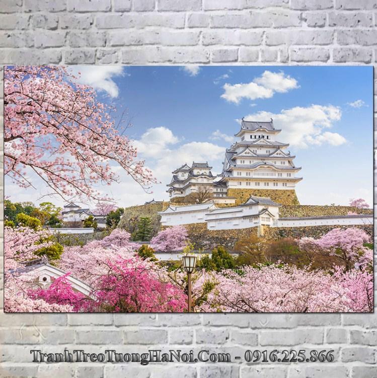Trạnh lâu đài himeji nhật bản nổi tiếng