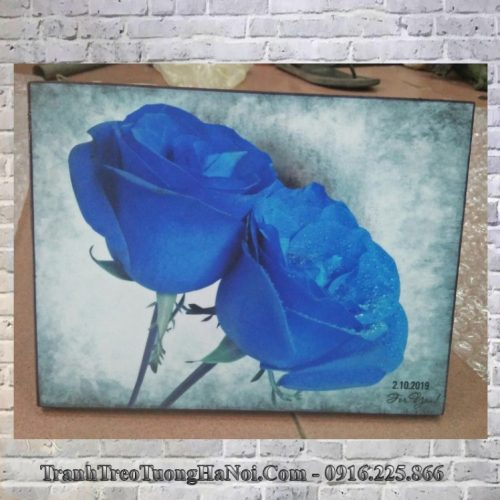 Tranh hoa hong xanh AmiA 438 lam qua tang y nghia