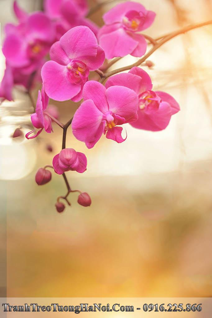 Tranh hoa lan hong phu quy treo o am tuong kho dung