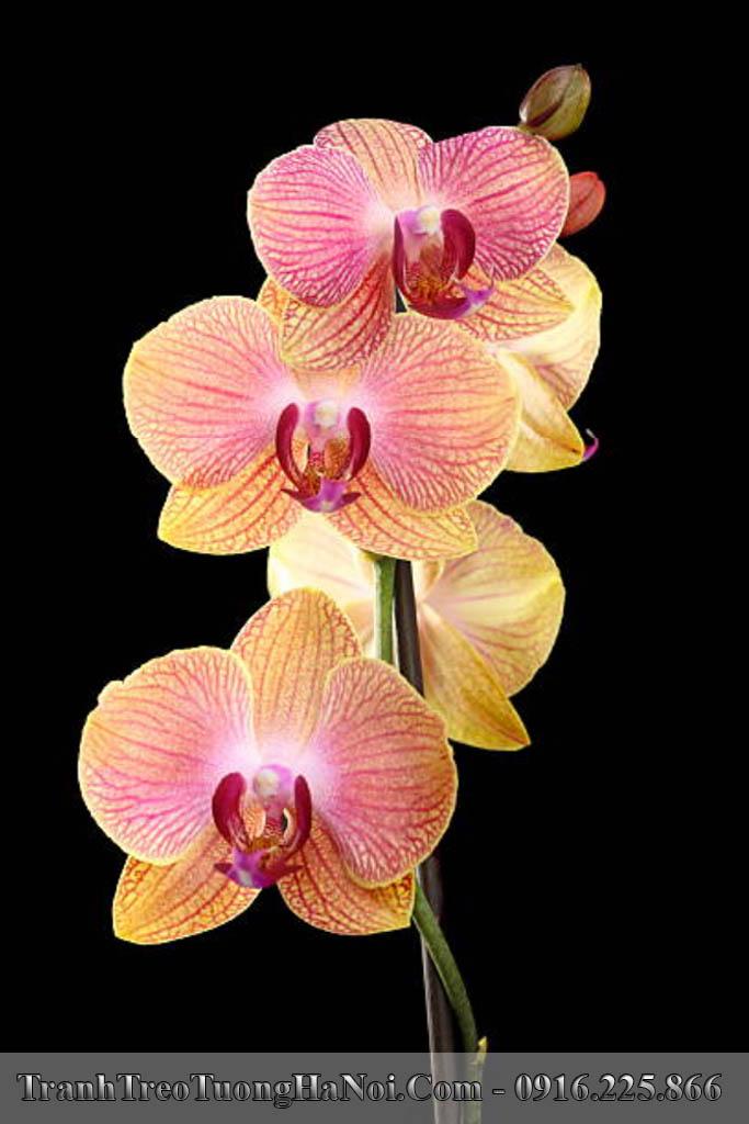 Tranh hoa lan canh buom treo o am tuong kieu dung