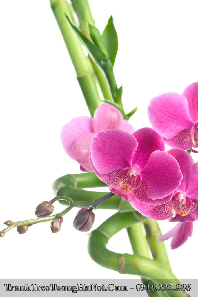 Tranh hoa lan no phu quy va truc quan tu kieu dung