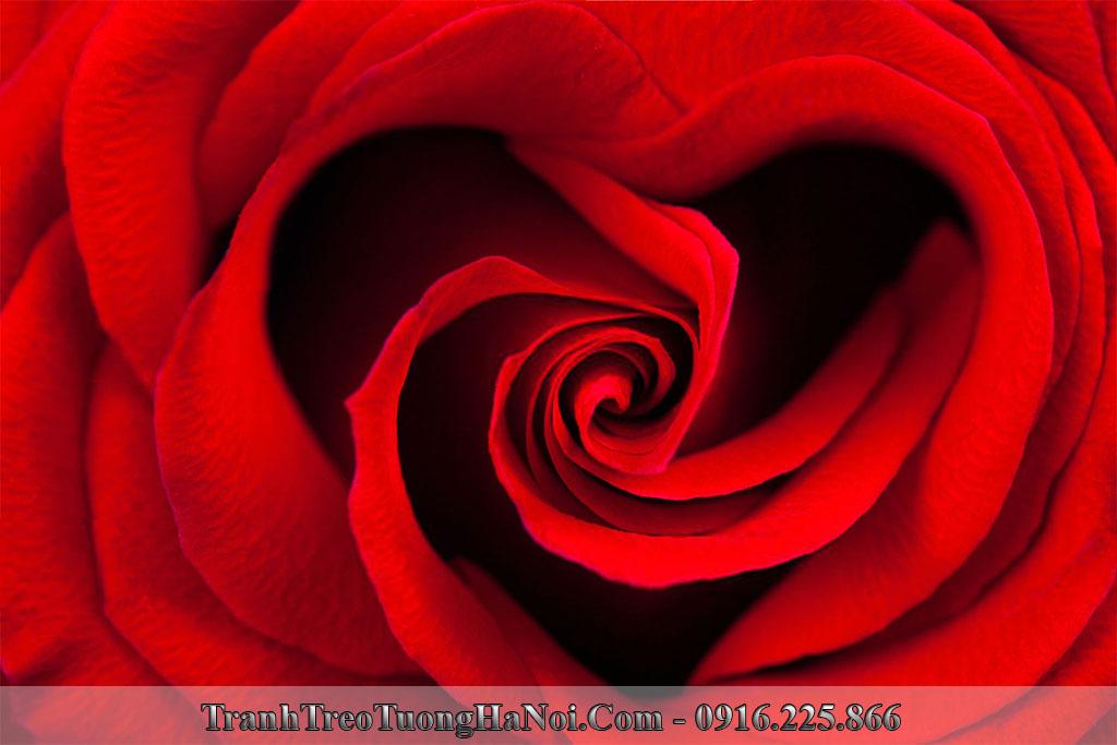 Qua tang ky niem ngay cuoi tranh hoa hong tinh yeu y nghia amia is630041818