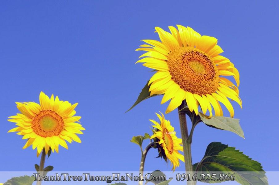 Tranh treo tuong hoa huong duong toa nang lam qua tang tan gia y nghia