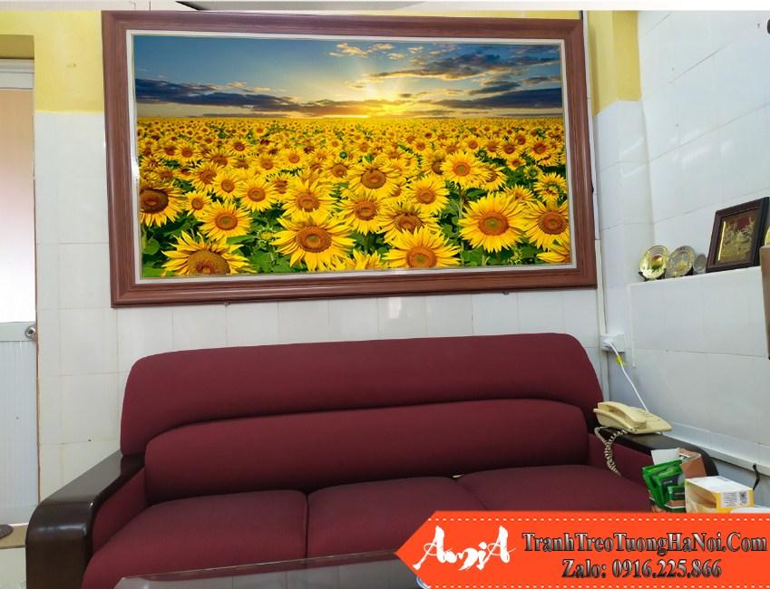 Tranh canh dong hoa nang mat troi kho lon amia hd129