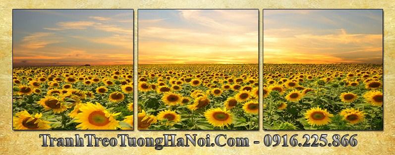 Tranh phong canh dong hoa huong duong 3 tam AmiA 3060