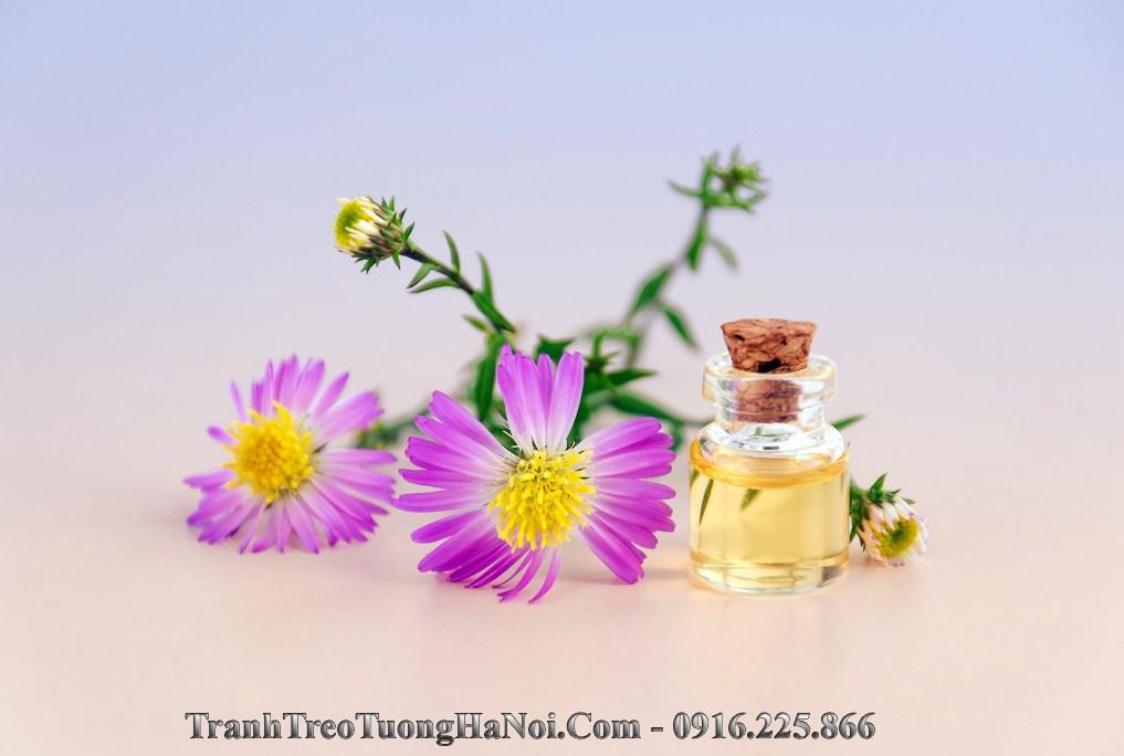Hinh anh dep thien nhien tinh dau hoa cuc sp93