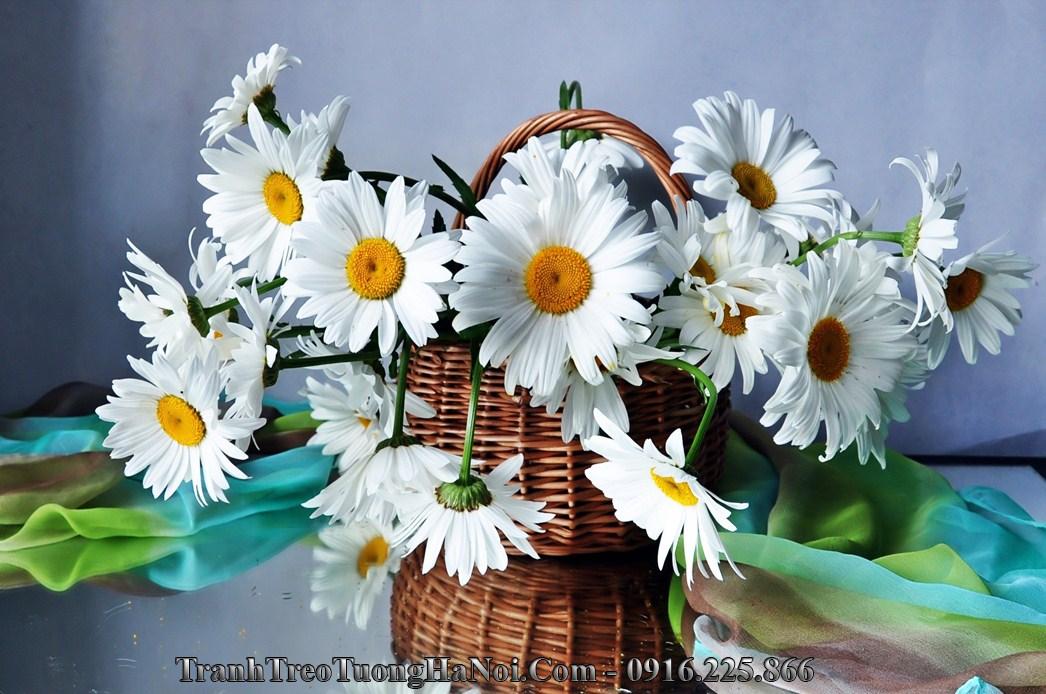 Hinh anh gio hoa cuc hoa mi amia 2044
