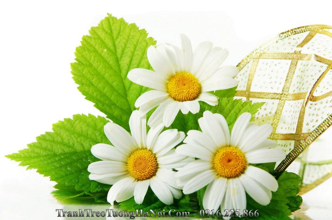 Hinh anh hoa cuc hoa mi dep amia 657