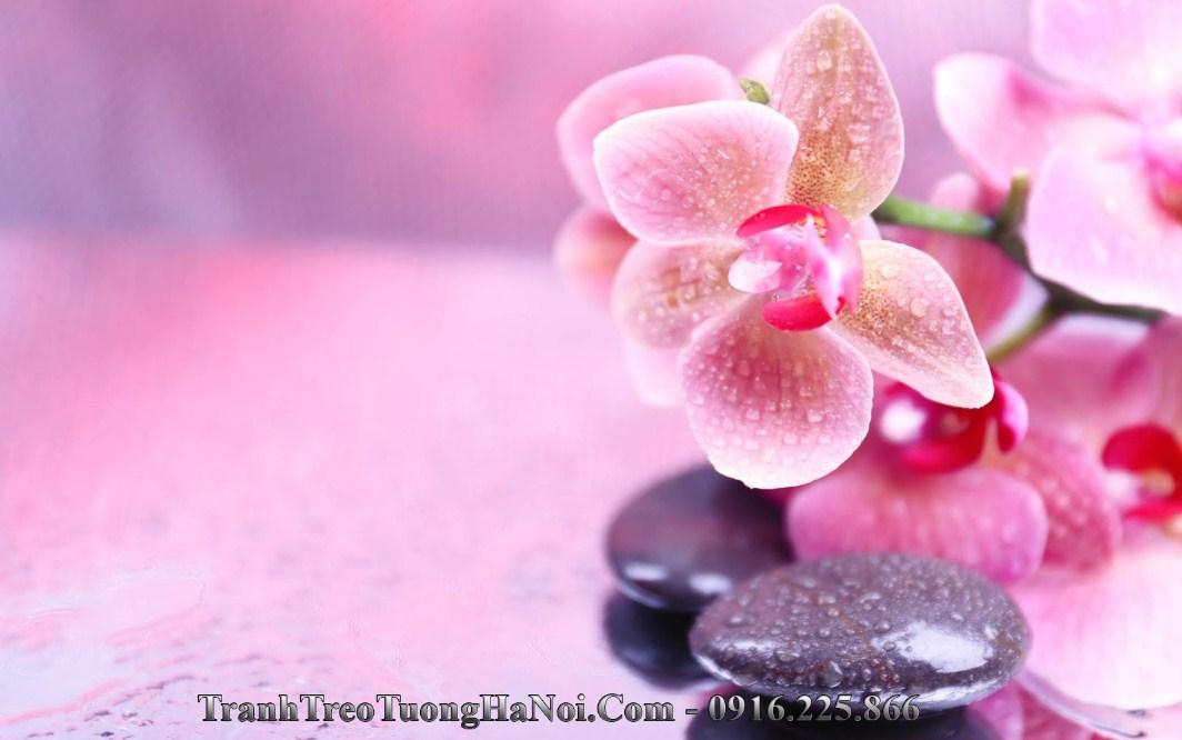 Hinh anh hoa da spa dep amia 1446c