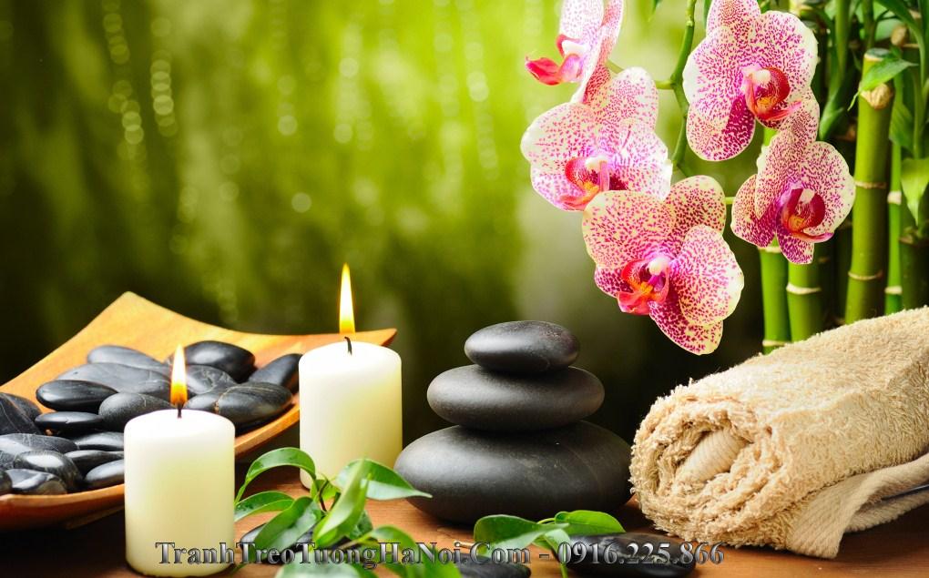 hinh anh spa chat luong cao hoa phong lan amia 1118A