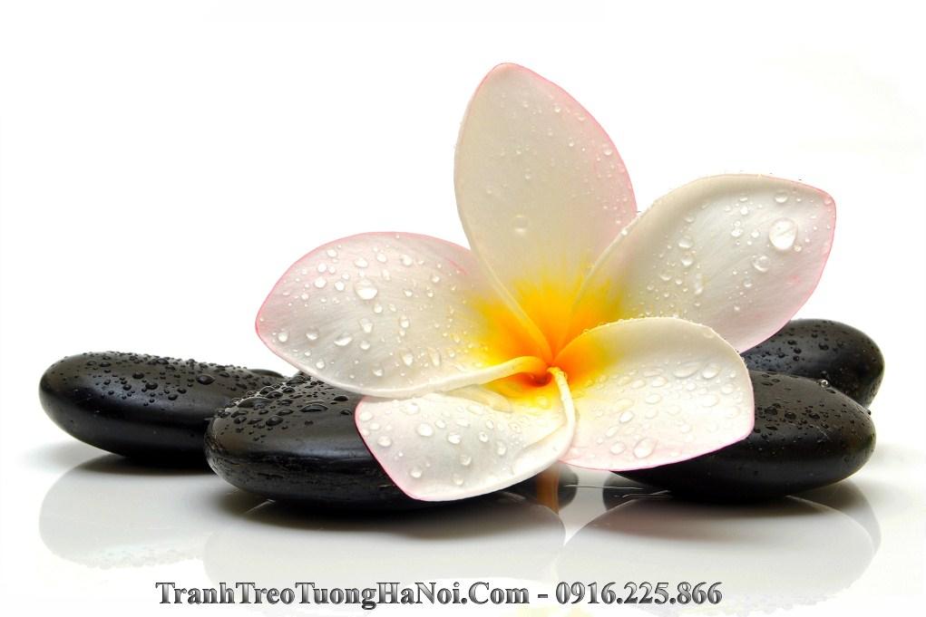 Hinh anh spa hoa dai tren da amia sp39