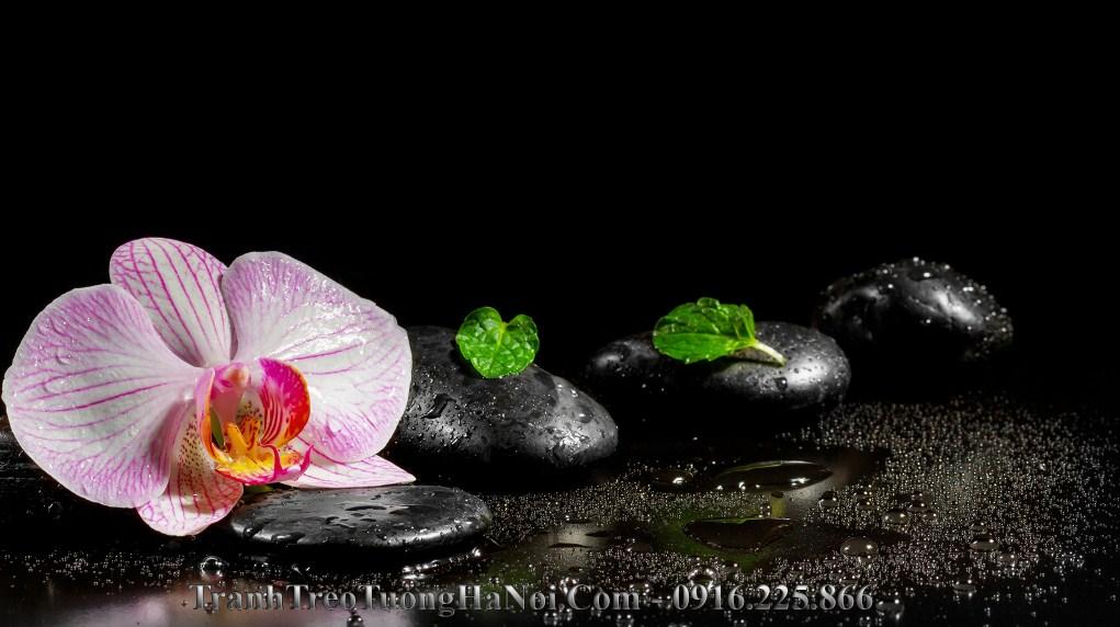 Hinh anh spa hoa lan da amia sp27