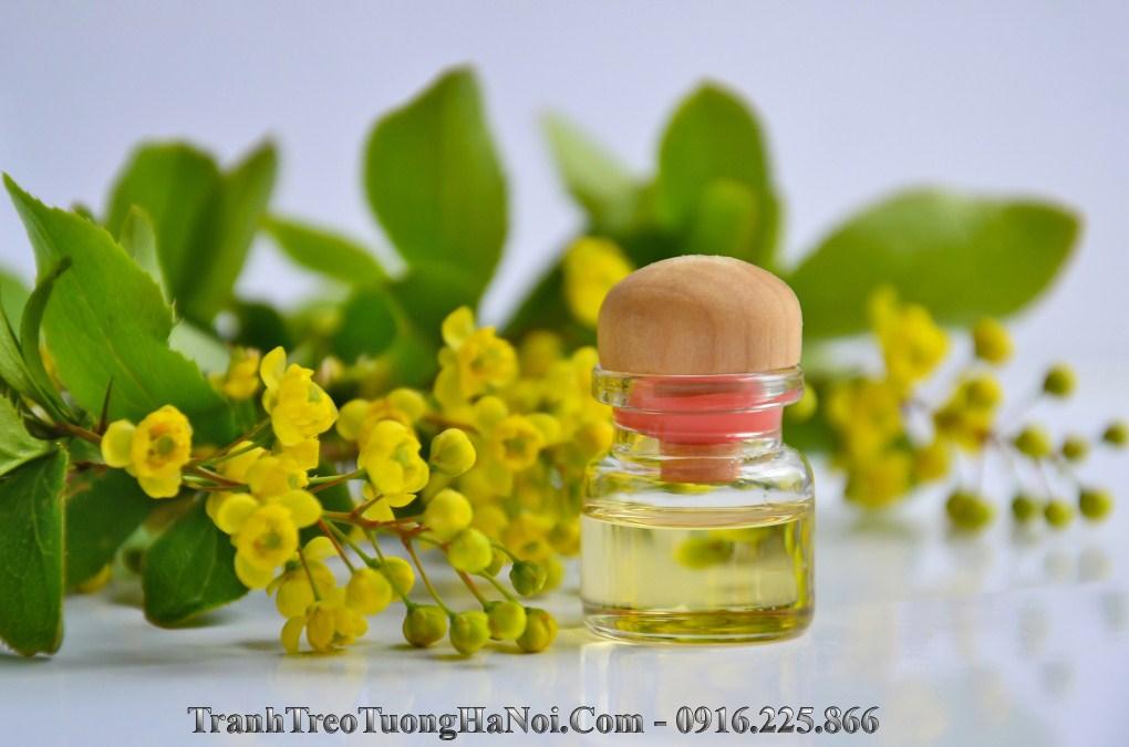 Hinh anh tinh dau hoa thien nhien amia sp100