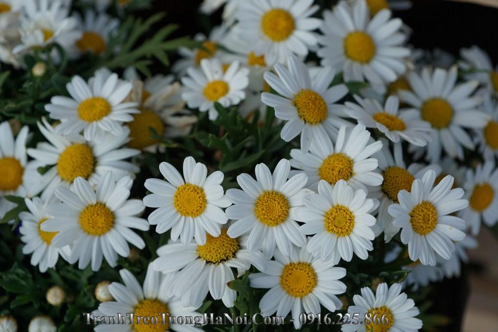 Tranh cuc hoa mi treo tuong dep gia re amia hc118