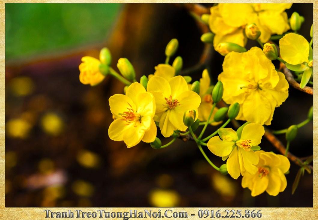Tranh hoa mai vang treo tet sang dep y nghia amia 270 275
