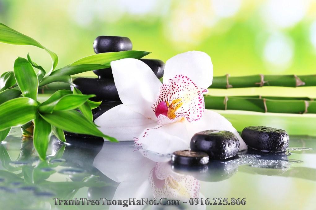 tranh spa hoa phong lan truc da thien nhien amia 951