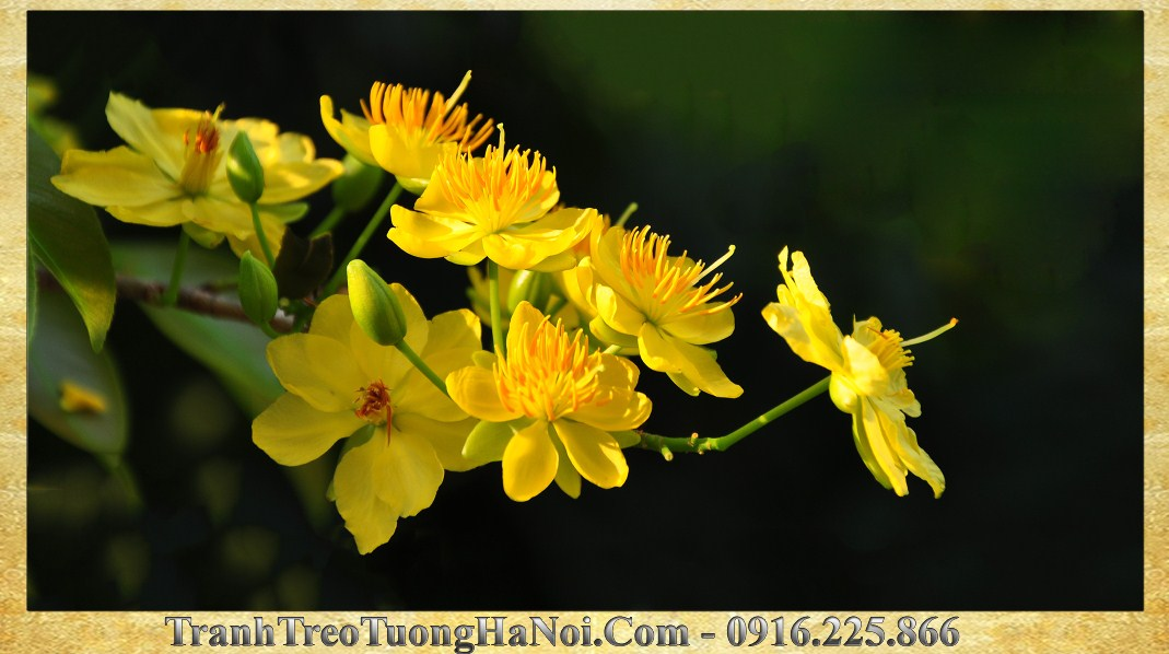 Tranh treo tuong amia 274 hoa mai vang phat loc