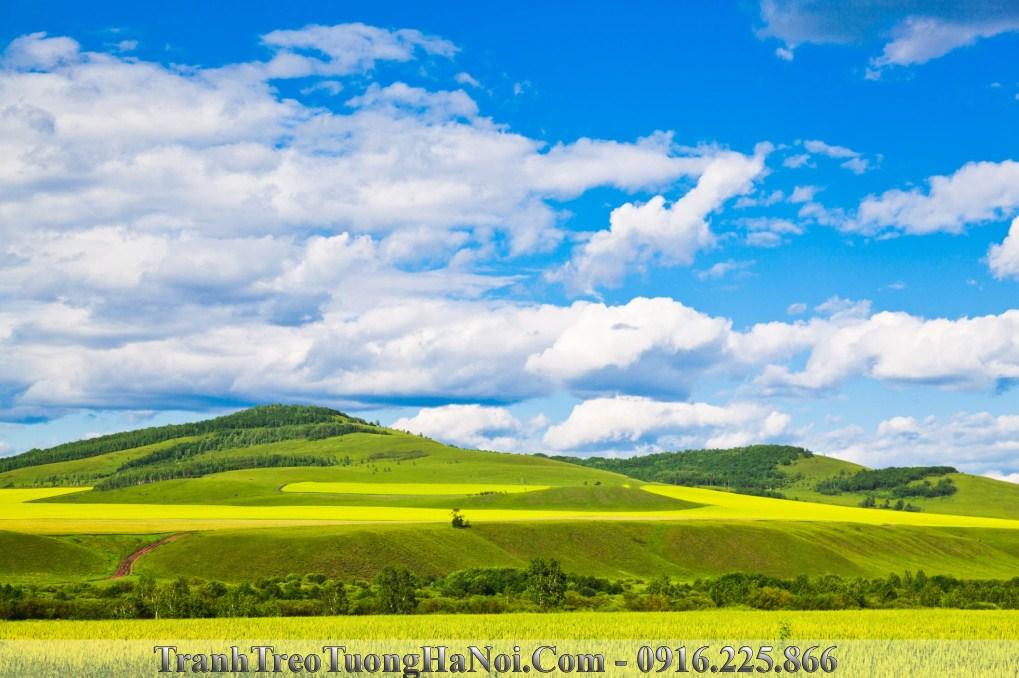Trnah phong canh thao nguyen trong xanh bao la amia