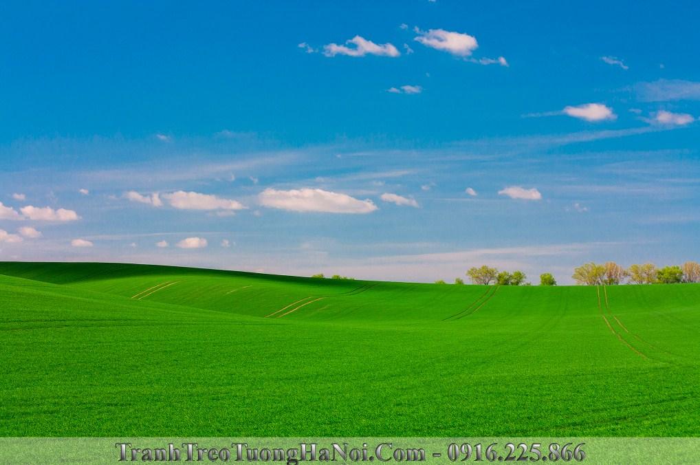 Tranh phong canh thao nguyen xanh rong menh mong amia