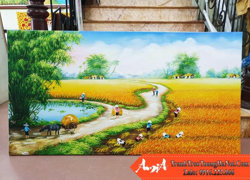 Tranh ve phong canh canh dong lua chin AmiA TSD 326