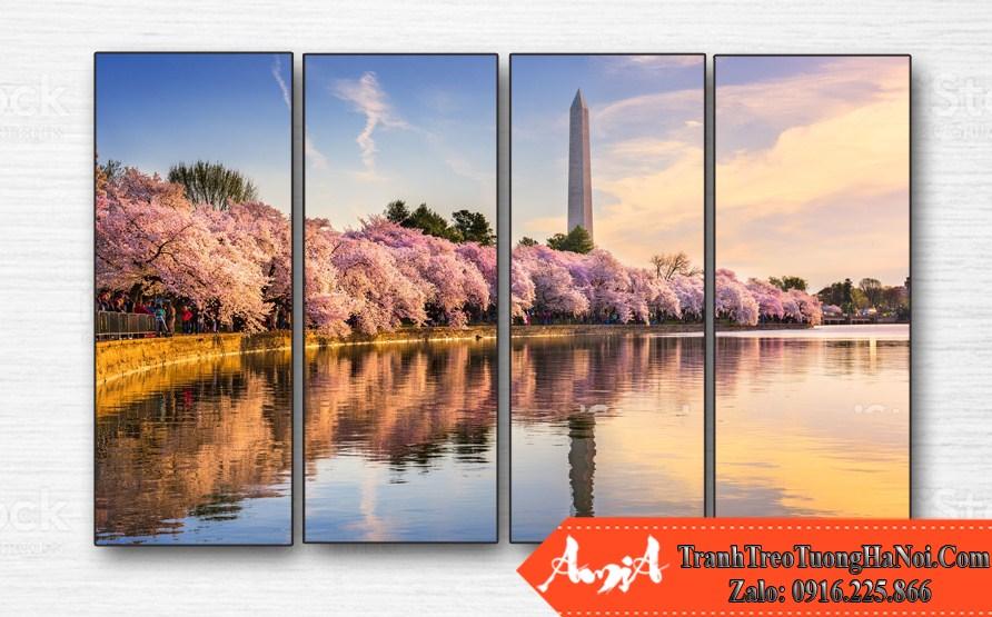 tranh canh dep hoa sakura o washington dc