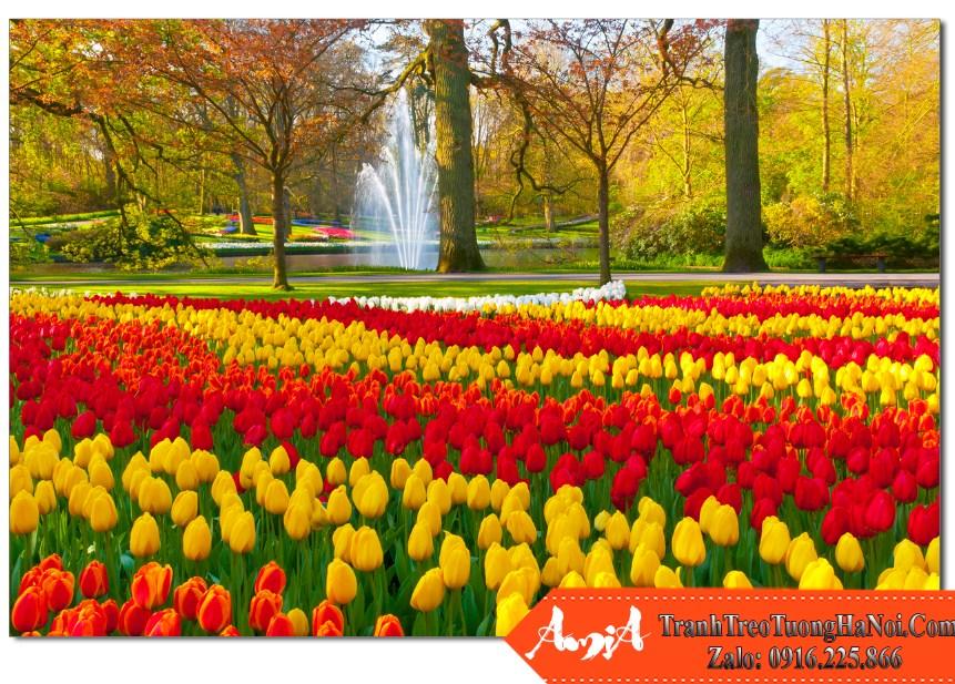 Buc tranh phong canh cong vien hoa tulip